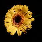Yellow Flower - lighten the dark by Ellaaa M