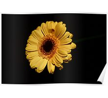 Yellow Flower - lighten the dark Poster