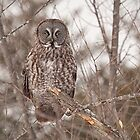 Great Grey Owl by Eunice Gibb