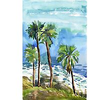 Coconut palms on the cliff Photographic Print