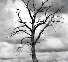 Dead tree and two birds by Cebas