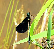 the green damselfly by LoreLeft27