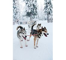 Huskies away Photographic Print