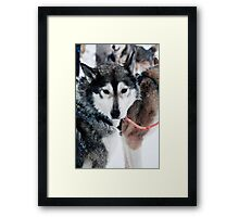 I am part wolf Framed Print