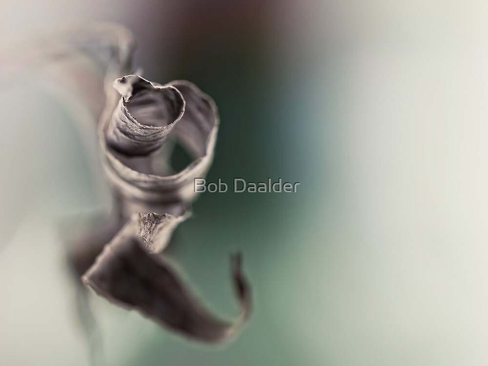 Still there.... by Bob Daalder