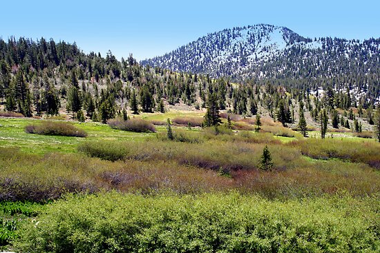 """High Sierra Mountain Meadow"" by Lynn Bawden"