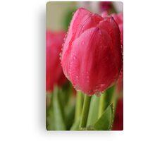 Spring Tulips 2 Canvas Print