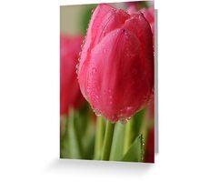 Spring Tulips 2 Greeting Card