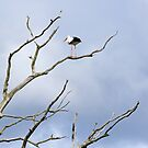 Dead tree and stork by Cebas