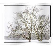 common snow Poster