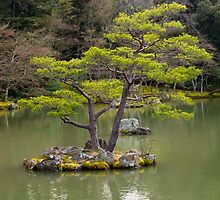 Japanese garden by Cebas