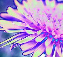 A Pink Dandelion by aprilann