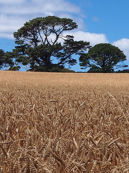 Paddock with grain. by Esther's Art and Photography
