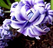 Some Purple Stuff by Stevie B