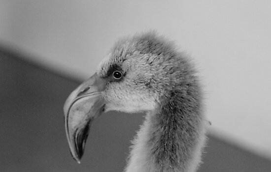 Flamingo Chick by Ladymoose
