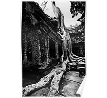 Stretched Roots, Cambodia Poster