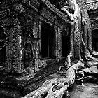 Famous Roots, Cambodia by Michael Treloar