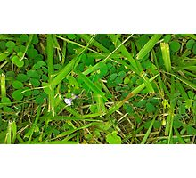 The Green Grass Photographic Print