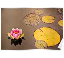 Water Lily in Dunvegan Poster