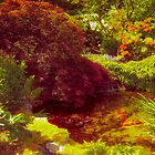 Japanese Garden_3 by Elizabeth Thomas