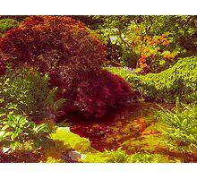 Japanese Garden_3 Photographic Print
