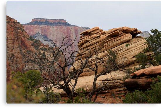 Zion National Park by Anthony & Nancy  Leake