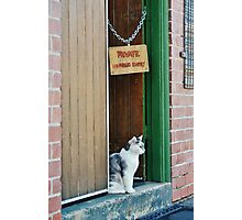 Brutus the Bouncer Photographic Print