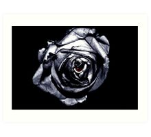 Rose Retina  Art Print