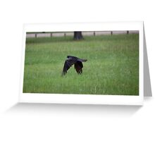 Congratulations Ravens!!! Greeting Card