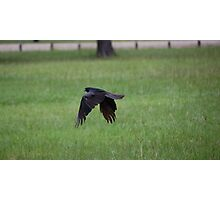 Congratulations Ravens!!! Photographic Print