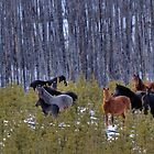 Ghost Horses by JamesA1