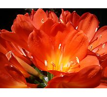 Roma Street Parklands Flower Photographic Print