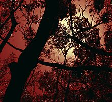 The Glow - Fiery by Elisabeth Dubois