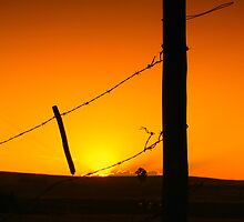 barbed 2 by Vinchenso