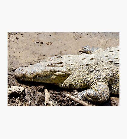 Nile Crocodile Photographic Print