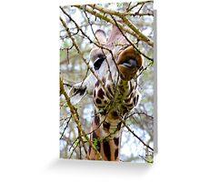 Giraffe Foraging Greeting Card