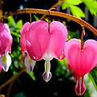 bleeding heart by studenna