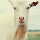 Goat by Falko Follert