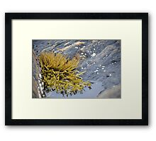 Seaweed Amongst the Rocks Framed Print