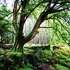 Along the coffin walk, Grasmere, Lake District by Simon Duckworth
