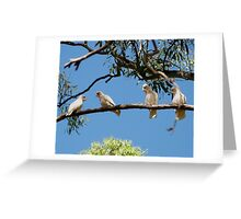 'HEY! YOURE FACING THE WRONG WAY!' Long Billed Corella's.  Greeting Card