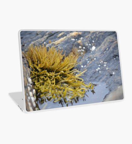 Seaweed Amongst the Rocks Laptop Skin