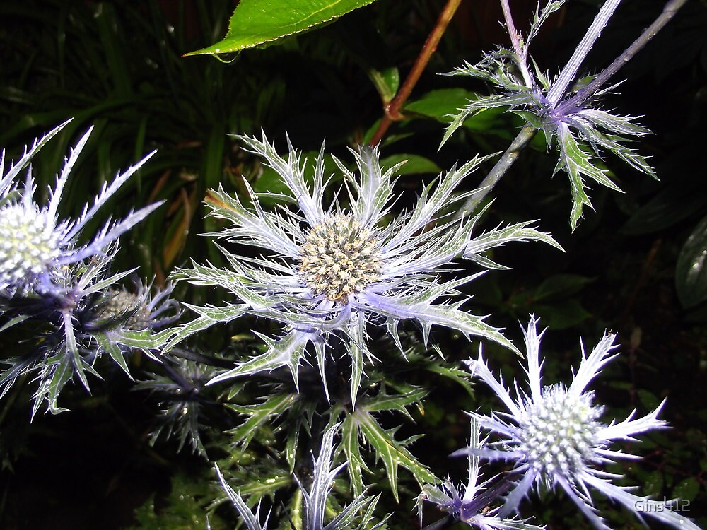 sea holly by Gins412