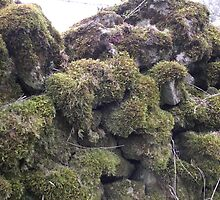 moss covered wall by Gins412