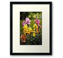 Flower - Antirrhinum - Grace Framed Print