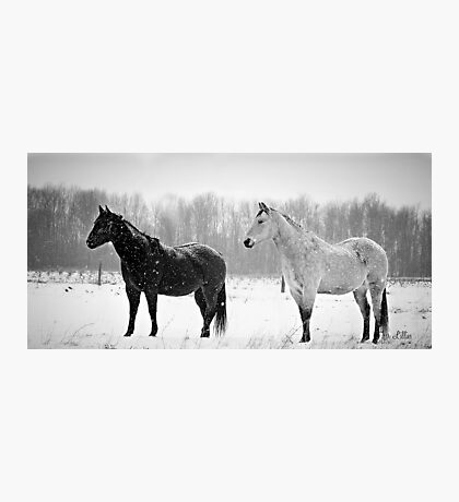 Black and white beauty Photographic Print