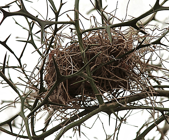 Empty Nest by lisapowell
