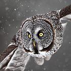 Full Frame Face In Flight by Gary Fairhead