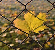 is it insurmountable? by Natalie Lvova