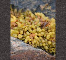 Seaweed Between Rocks Unisex T-Shirt